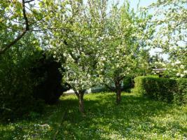 Foto 2 Kleingarten(privat) mit Bungalow in Bollberg/Stadtroda zu verkaufen