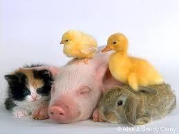 Foto 9 Kleintierbetreuung Hund-Katze-Hase-Ratten-Hamster-Vögel ec.