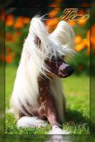 Foto 2 Körzucht von chinesischen Schopfhund