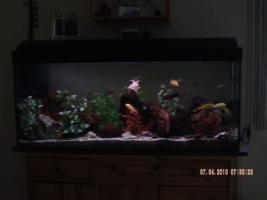 Komplett Aquarium 160 Lieter