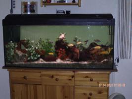 Foto 2 Komplett Aquarium 160 Lieter