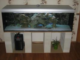 Komplett Aquarium 720 Liter und Malawi Räuber