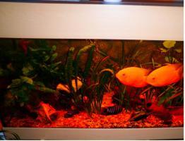 Komplett Aquarium MP EHEIM mit Mondlicht!!!!