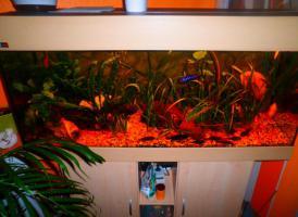 Foto 3 Komplett Aquarium MP EHEIM mit Mondlicht!!!!