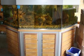Komplett-Aquarium Spezialanfertigung S�ss- und Salzwasser geeignet