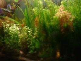 Komplette Bepflanzung für 200 Liter Aquarium, 20 Bund Wasserpflanzen