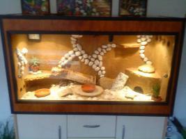 Komplettes Terrarium mit einem Pärchen Bibrongecko abzugeben !