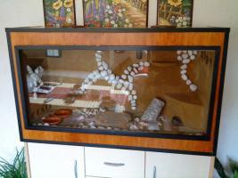 Foto 4 Komplettes Terrarium mit einem P�rchen Bibrongecko abzugeben !