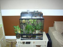 Korallenfinger (Litoria caerulea) plus Terrarium plus Einrichtung