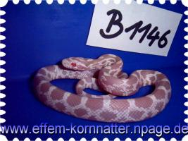 Foto 3 Kornnatter/Miami/Charcoal(Black-Albino)Anerythristic Typ B/Snow/Fluorescent-Orange/Classik/Okeetee