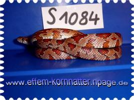 Foto 22 Kornnatter/Miami/Charcoal(Black-Albino)Anerythristic Typ B/Snow/Fluorescent-Orange/Classik/Okeetee