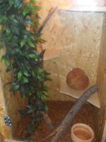 Kornnatter mit Terrarium
