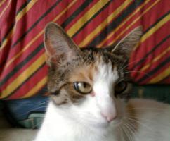Foto 2 Kostenlose Katze Abzugeben (Dringend)