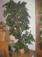 Foto 2 Kunst-Ficus ca. 2,00 m in top Qualität - täuschend echt!!!