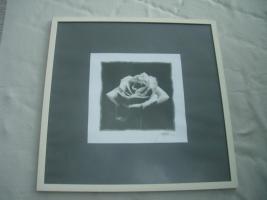 Kunstdruck ''Rose'' s/ w