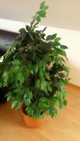 Foto 2 Kunstpflanze Ficus Benjamini grün 1,40 Meter