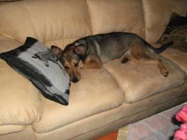 Foto 3 Kuschel Hündin ''Cleo'' aus dem Tierschutz sucht Zuhause bei Ihnen!