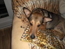 Foto 6 Kuschel Hündin ''Cleo'' aus dem Tierschutz sucht Zuhause bei Ihnen!
