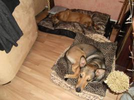 Foto 7 Kuschel Hündin ''Cleo'' aus dem Tierschutz sucht Zuhause bei Ihnen!
