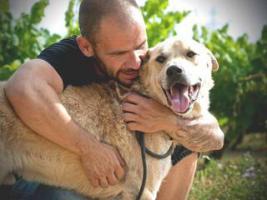 Foto 5 Labbi Labrador Mix FORD sucht ein zuhause oder PS