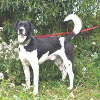 Labbi Labrador Mix LULO sucht ein zuhause oder PS