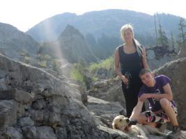 Labrador Hündin  in schwarz oder braun gesucht