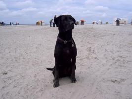 Foto 2 Labrador-Mischlich Tom