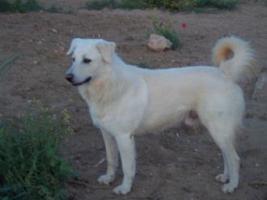 Foto 2 Labrador-Mischlingsrüde sucht eine zweite Chance!