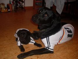 Labrador-Mix-Welpen suchen liebe Familie!!!