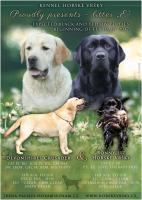 Labrador Retriever Welpen mit Stammbaum