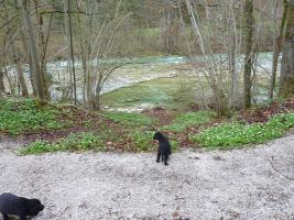 Foto 9 Labrador Welpen schwarz aus erstklassiger Zucht Abgabe Anfang Mai