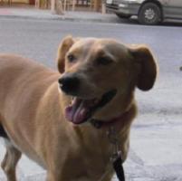 Foto 2 Labradormischling