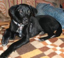Laica sucht neues Zuhause