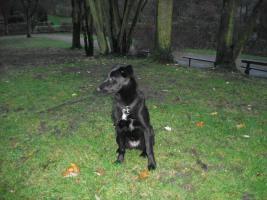 Foto 2 Laica sucht neues Zuhause