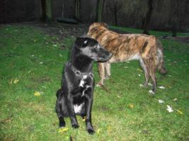 Foto 3 Laica sucht neues Zuhause