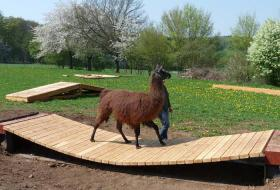 Lama - und Alpaka - Ausbildung, auch vor Ort