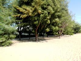 Foto 5 Land, Liegenschaft, Eigentum in Thailand erwerben oder aber speziell...
