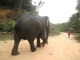 Foto 23 Land, Liegenschaft, Eigentum in Thailand erwerben oder aber speziell...