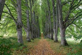 Foto 8 Landgut in der Nähe von Tukums in Lettland
