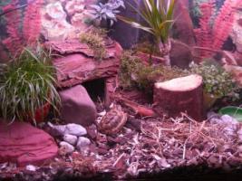 Landschildkröten in Not nimmt absoluter Schildi - Liebhaber auf !
