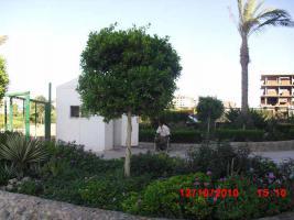 Foto 2 Langzeitmiete 75m2 möbliert in Oasis Rassort Hurghada Ägypten