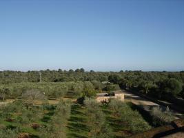 Foto 3 Langzeitmiete Mallorca: Einzigartige Pool Finca mit Olivenplantage auf einem 26 HA Grundst�ck in erh�hter Lage von Campos