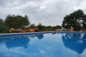 Foto 2 Langzeitmiete Mallorca: Neuwertige Pool Finca zwischen Porto Colom und Cala Murada