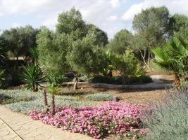 Foto 5 Langzeitmiete Mallorca: Ruhige Pool Finca mit Pferdekoppel zwischen Campos und Ses Covetes