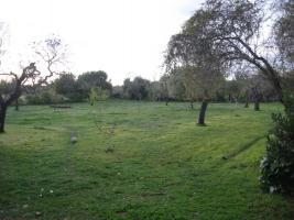 Foto 2 Langzeitvermietung Mallorca: Charmante kleine Finca mit 4000 qm Grundstück (Pferdehaltung) bei Llucmajor