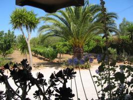 Foto 4 Langzeitvermietung Mallorca: Charmante kleine Finca mit 4000 qm Grundstück (Pferdehaltung) bei Llucmajor