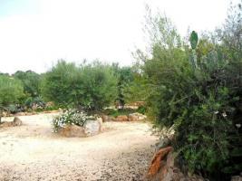 Foto 5 Langzeitvermietung Mallorca: Ruhige Pool Finca zwischen Campos und Ses Salines