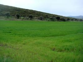 Large plot near the City of Volos/Griechenland