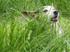 Lass Dein Haustier Geld verdienen - Heimlieferservice
