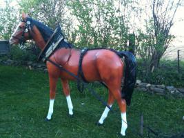 Foto 3 Lebensgroße Pferdefigur für festumzüge oder Werbezwecke
